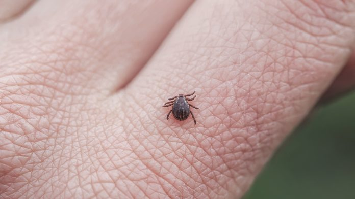 Connecticut confirms 2 Powassan virus infections: What to know about tick-borne illness
